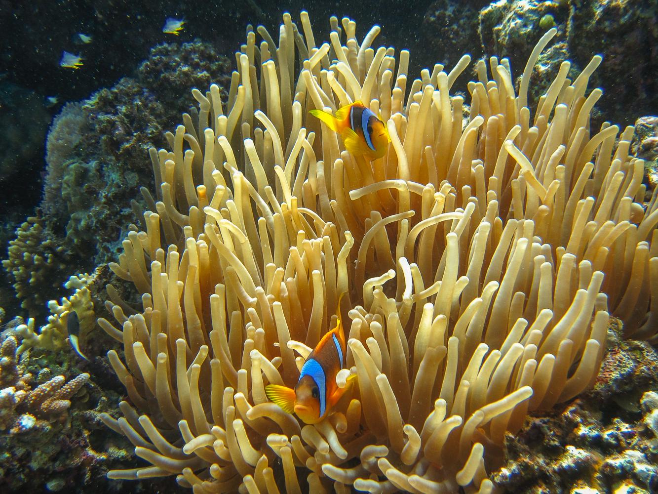 subacque Mar Rosso