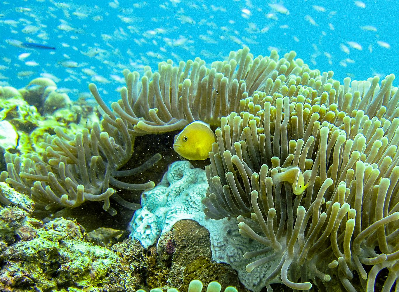 zanzibar subacquea
