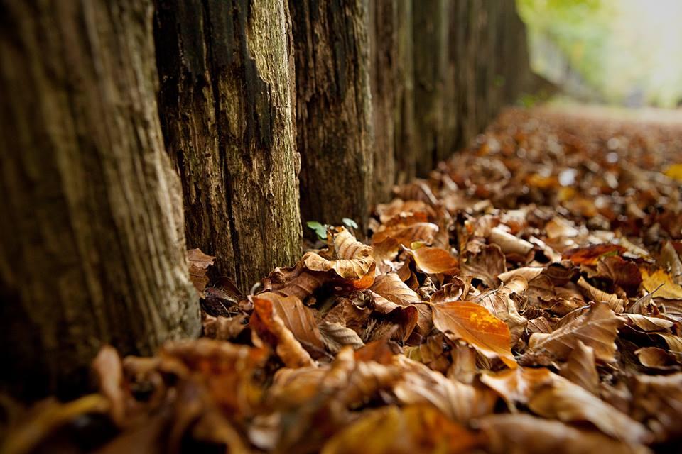 colori d'autunno | 2013