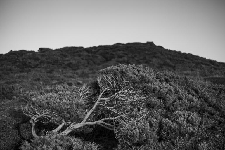 Come alberi controvento