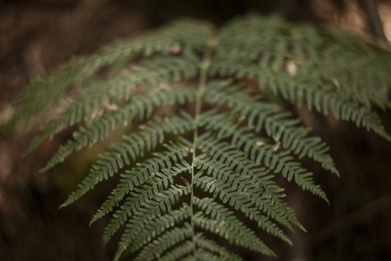Foresta Acquafrida